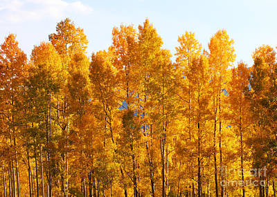 Photograph - Autumn In The Rockies by Kate Avery