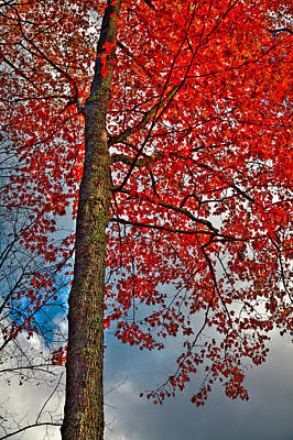 Autumn In The Trees Art Print by David Patterson