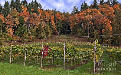 Photograph - Autumn In The Vineyard by Valerie Garner