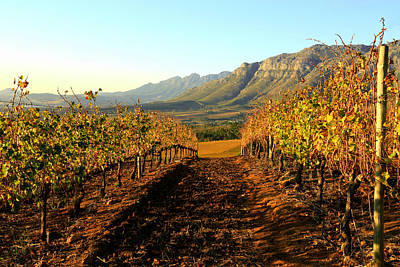 Cape Town Photograph - Autumn In The Vineyards by Riana Van Staden