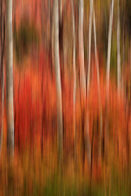 Photograph - Autumn In The Wasatch Abstract by TL  Mair
