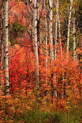 Photograph - Autumn In The Wasatch by TL  Mair