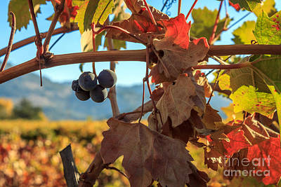 Photograph - Autumn In The Wine Country by James Eddy