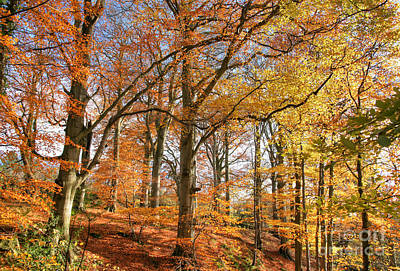 Photograph - Autumn In The Wood by David Birchall