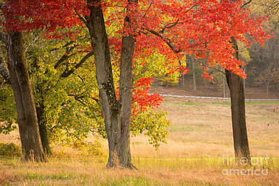 Photograph - Autumn In Valley Forge by Rima Biswas