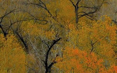Autumn Intrigue Art Print