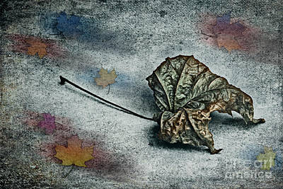 Photograph - Autumn Is Around The Corner by Jutta Maria Pusl