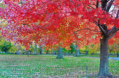 Photograph - Autumn In Central Park by Barbara Manis