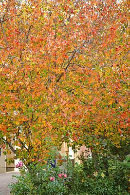 Photograph - Autumn Jewels by Robert Meyers-Lussier
