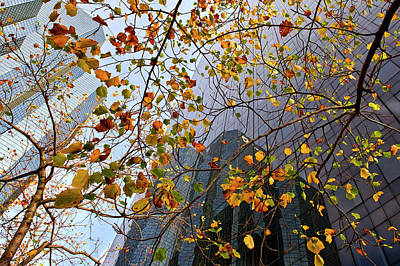 Glass Wall Photograph - Autumn by Jure Kravanja