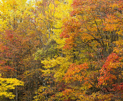 Photograph - Autumn by Kathy Ponce
