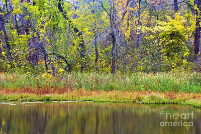 Photograph - Autumn Lakeside Colors  by Paul W Faust -  Impressions of Light