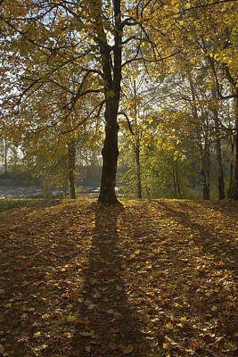 Autumn Landscape In A Park. Original by Gino Rigucci