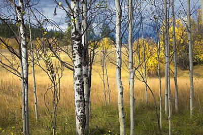 Autumn Landscape Original