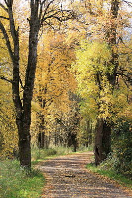 Country Lanes Photograph - Autumn Lane by Angie Vogel