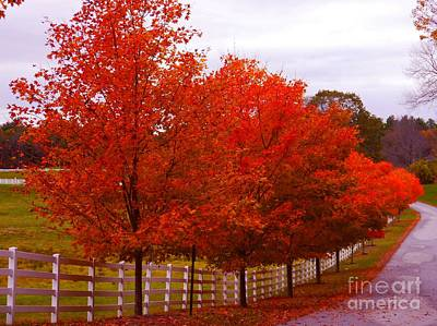 Pineland Farms Photograph - Autumn Lane At Pinelands Farm by Christine Stack