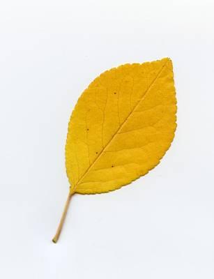 Photograph - Autumn Leaf 1 by HW Kateley