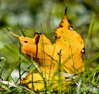Photograph - Autumn Leaf And Friend by Cheryl Baxter