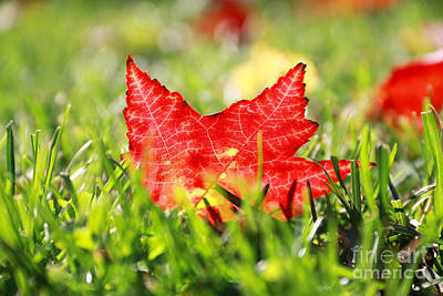 Photograph - Autumn Leaf by Charline Xia