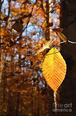 Digital Art - Autumn Leaf by Eva Kaufman