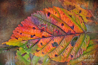 Photograph - Autumn Leaf I by Debbie Portwood