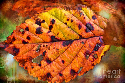 Photograph - Autumn Leaf II - Digital Paint by Debbie Portwood