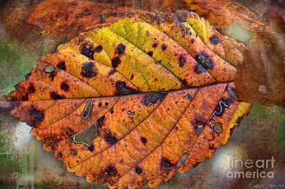 Photograph - Autumn Leaf II by Debbie Portwood