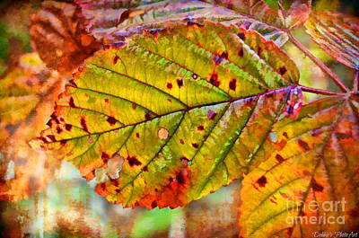 Photograph - Autumn Leaf IIi - Digital Paint by Debbie Portwood