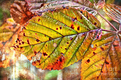 Photograph - Autumn Leaf IIi by Debbie Portwood