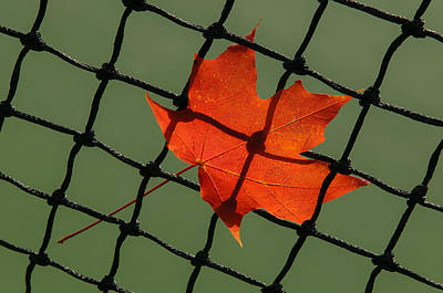 Photograph - Autumn Leaf In Net by Gary Slawsky
