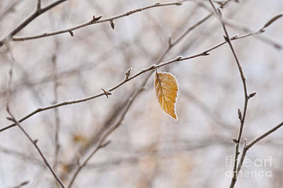 Photograph - Autumn Leaf by Jim Corwin