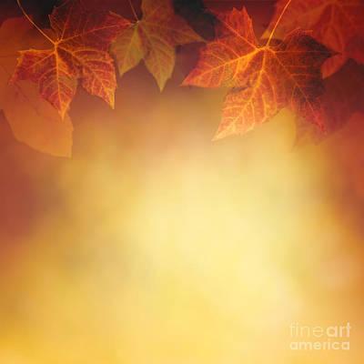 Mythja Photograph - Autumn Leaf by Mythja  Photography