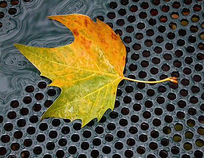 Photograph - Autumn Leaf On Drain In Bryant Park by Gary Slawsky