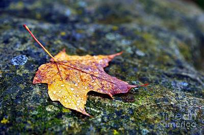 Autumn Leaf On Rocky Ledge Art Print by Terri Gostola