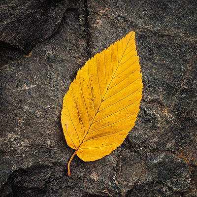 Photograph - Autumn Leaf On The Rock by Gary Slawsky