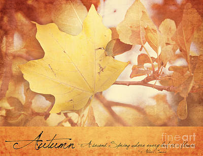 Photograph - Autumn Leaf by Pam  Holdsworth