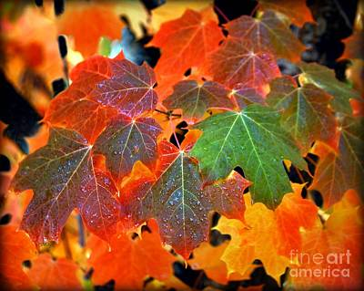 Photograph - Autumn Leaf Progression by Patrick Witz