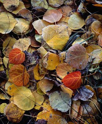 Photograph - Autumn Leaf Puzzle by Paul Breitkreuz