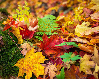 Photograph - Autumn Leaf Salad by Bill Pevlor