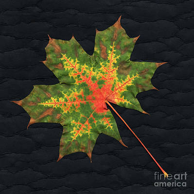 Photograph - Autumn Leaf by Scott Camazine