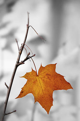 Photograph - Autumn Leaf by Veli Bariskan