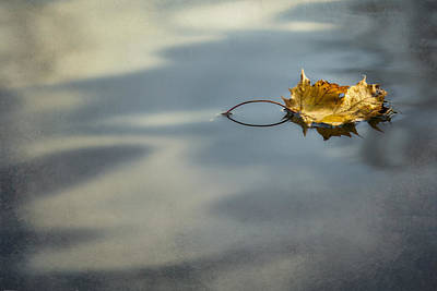 Photograph - Autumn Leaf by Yelena Rozov