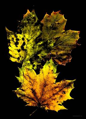 Yellows Photograph - Autumn Leafs In My Memory by Mario Perez