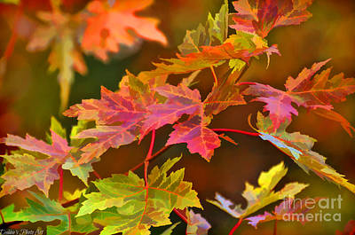 Photograph - Autumn Leaves - Digital Paint I by Debbie Portwood