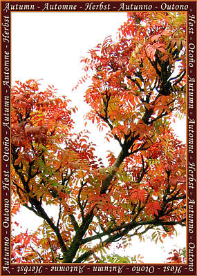Autumn Leaves 3 Art Print