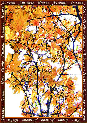 Photograph - Autumn Leaves 4 by Helene U Taylor