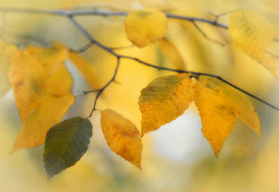 Photograph - Autumn Leaves Abstract by Carolyn Derstine