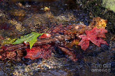 Photograph - Autumn Leaves Abstract by Sharon Talson