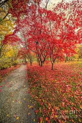 Red Leaf Digital Art - Autumn Leaves by Adrian Evans