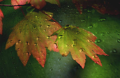 Photograph - Autumn Leaves And Rain by Marie Jamieson
